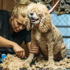 Dog boarding daycare grooming training charleston sc dog daze grooming solutioingenieria Images